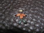 Henry Beguelin(エンリー・ベグリン)オミノの刺繍
